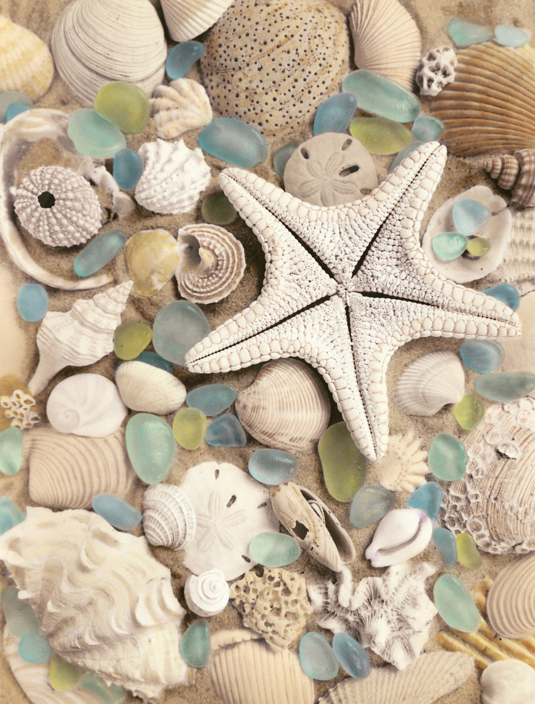 Bahama Starfish and Urchin Artwork