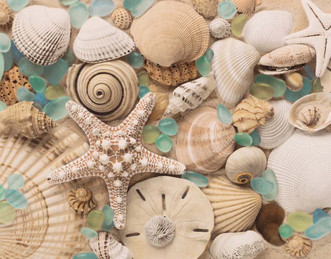Spiral Shell & Sea Glass Artwork