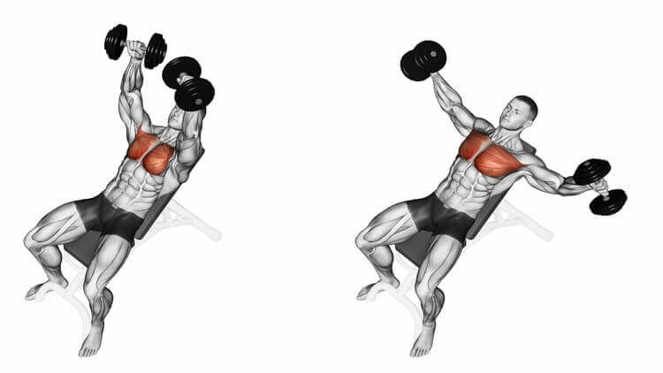 Exercising for bodybuilding Target muscles are marked in red