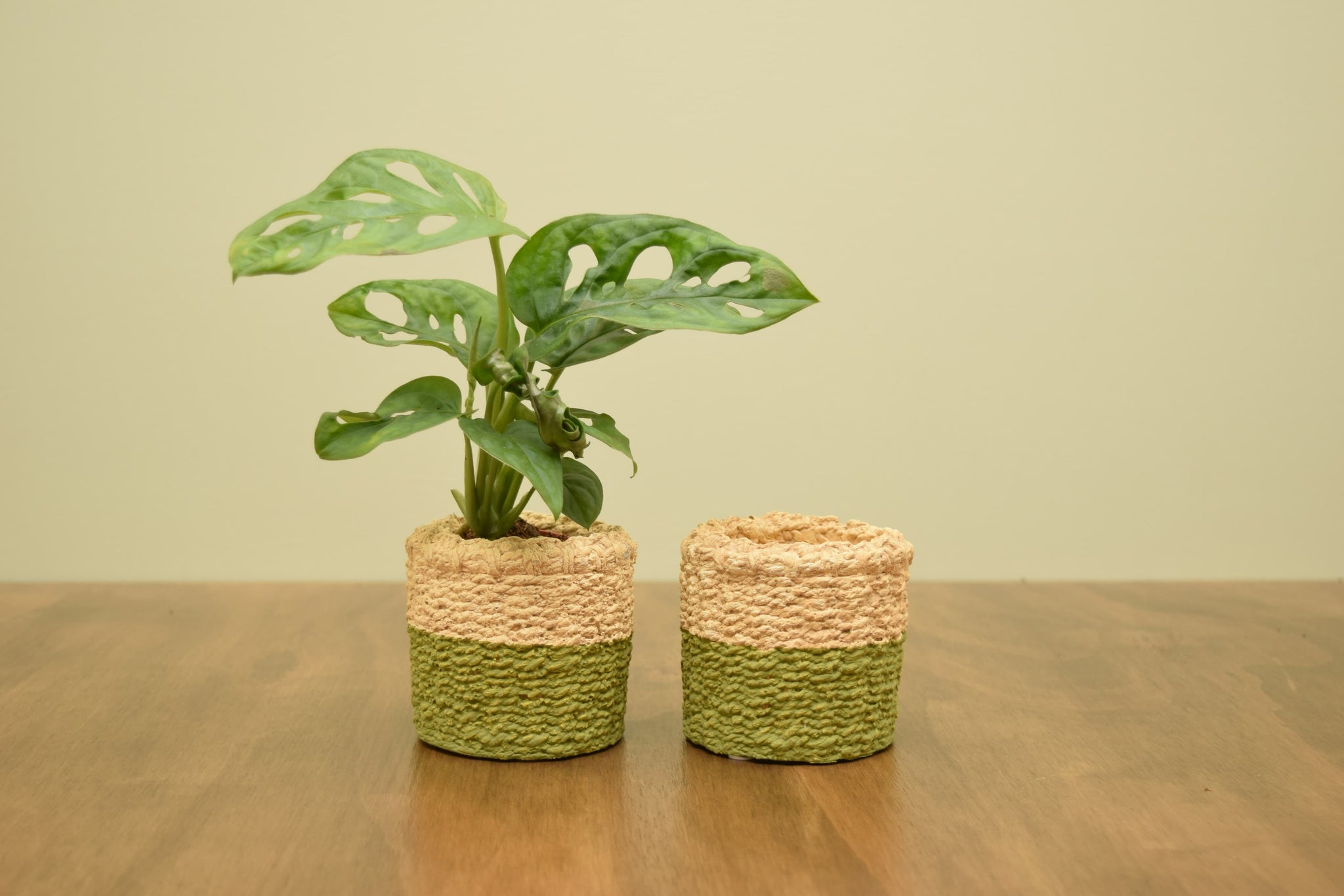 Dipped Cement Basket Pot