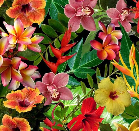 (NEW) FWR033 - Hawaiian Flowers (50cm)
