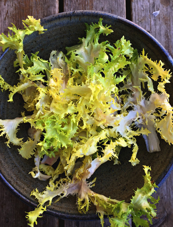 Curly Endive 'Bellesque'