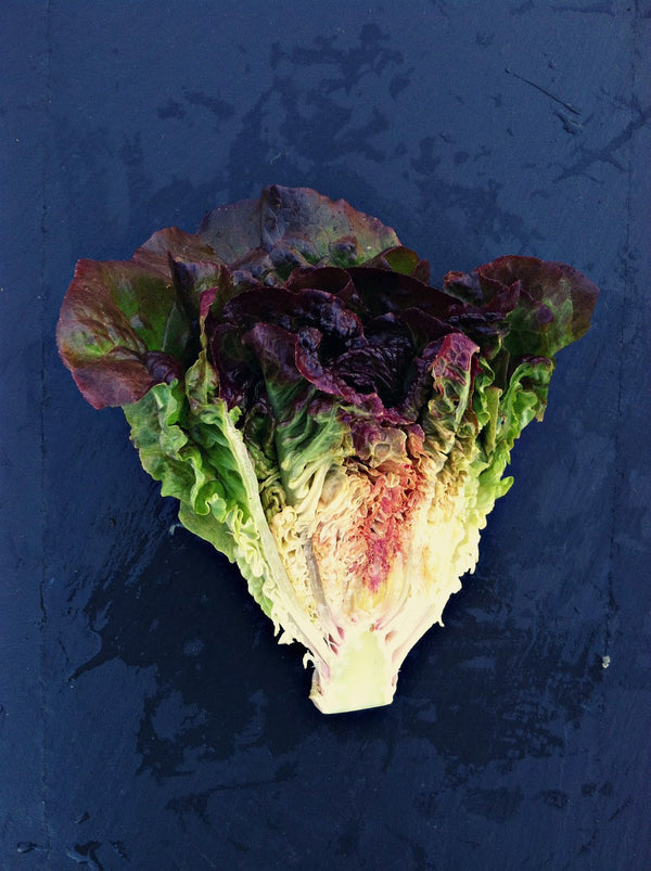 Lettuce 'Eruption'