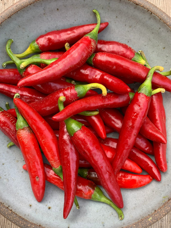 Hot Pepper 'Târgu Mureș'