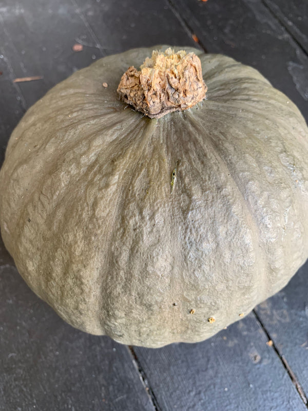 Winter Squash 'Marine Grey Kabocha""