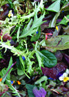 Uprising Spicy Mesclun