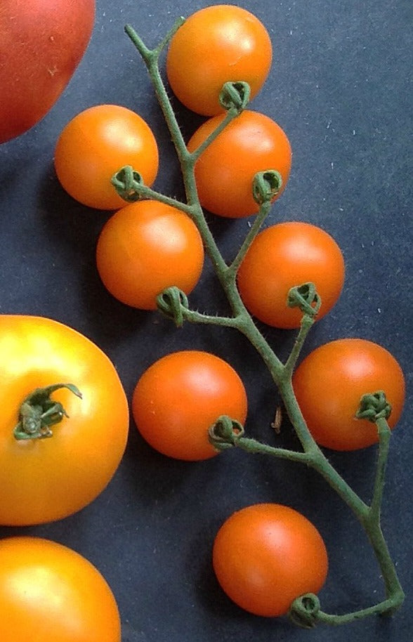 Tomato 'Sweet Orange II'