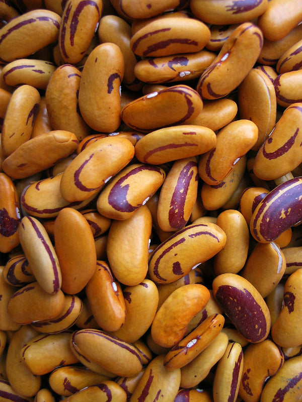 Bean, Bush Dry 'Tiger's Eye'