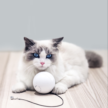 Eco-System LED Automatic 360 Degree Self Rotating Ball Pet Toys With Bell Built-In