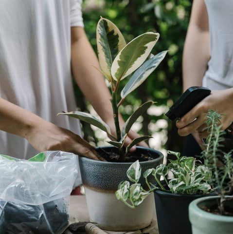 Easy_ways_to_say_thank_you_on_a_budget_give_a_plant