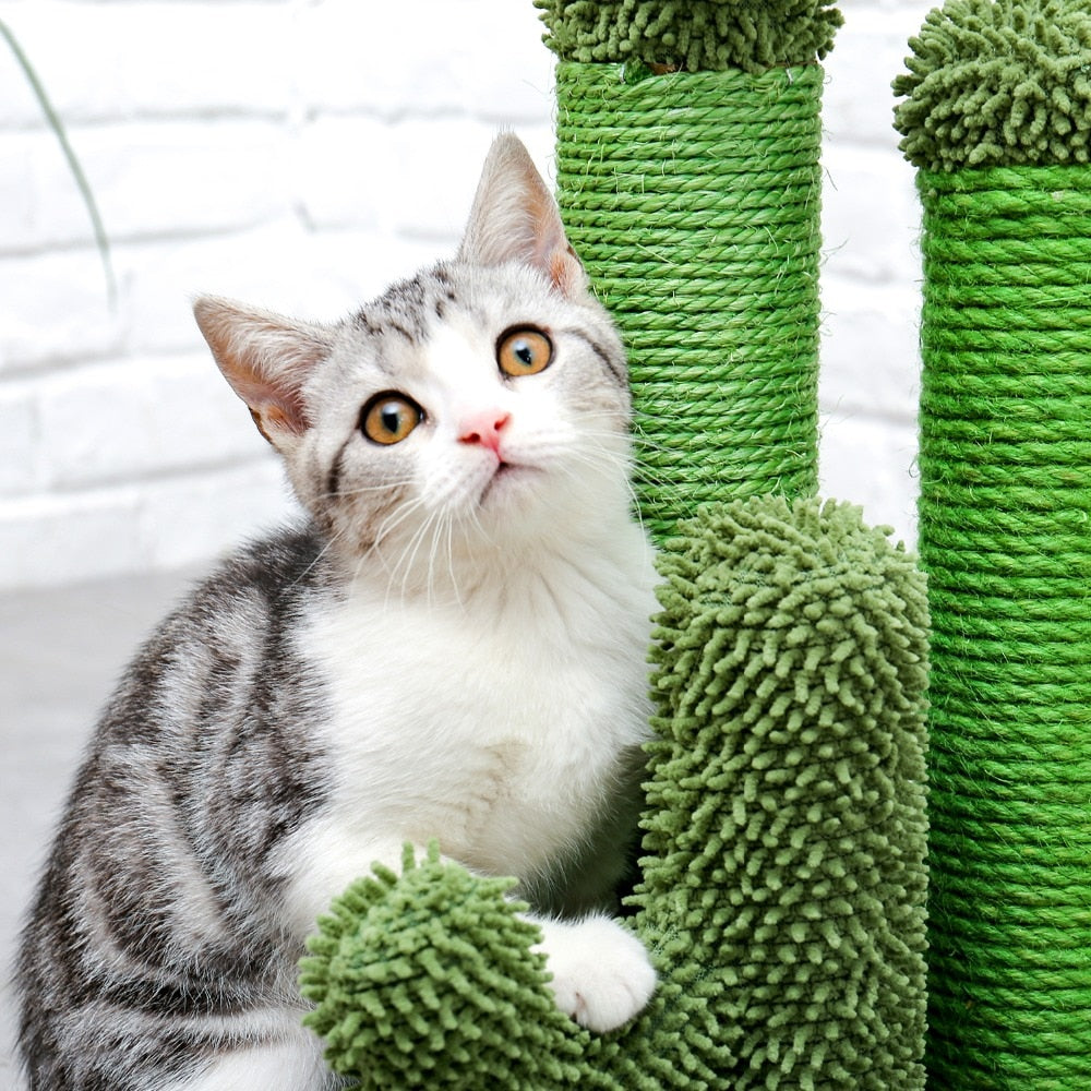 Cactus Cat Tree | Cactus Cat Climbing Tree with Ball | Cat Scratch Tree