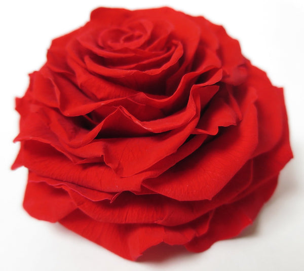 preserved rose side - preserved roses by Flower Co. Preserved Flowers Toronto