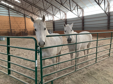 Horses in the arena at Kindness Ranch