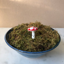 Load image into Gallery viewer, MINI Mushroom Planter Buddies