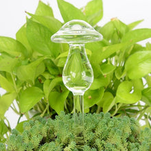 Load image into Gallery viewer, Decorative Clear Glass Self Waterers for Houseplants - 10 different designs