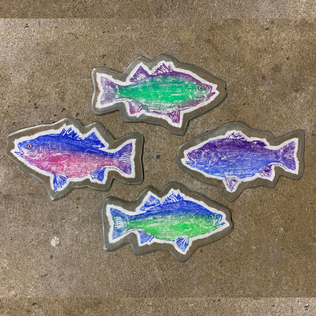 White Perch Fish Print