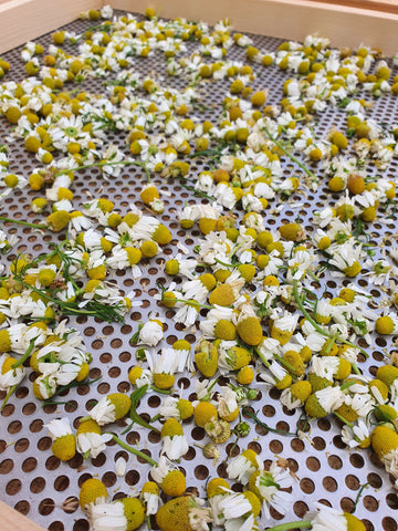 Chamomile on the drying rack.