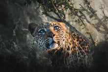 Load image into Gallery viewer, The Leopardess