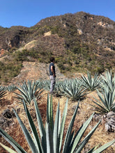 Load image into Gallery viewer, Mezcal Clan 55  Aagve fields