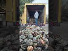 Load and play video in Gallery viewer, La Higuera Sotol leiophyllum Truck unload