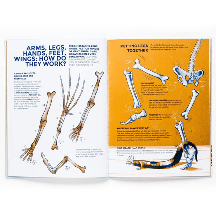 Who Owns These Bones? Book