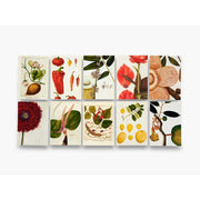 REMARKABLE PLANTS: BOX OF 30 POSTCARDS