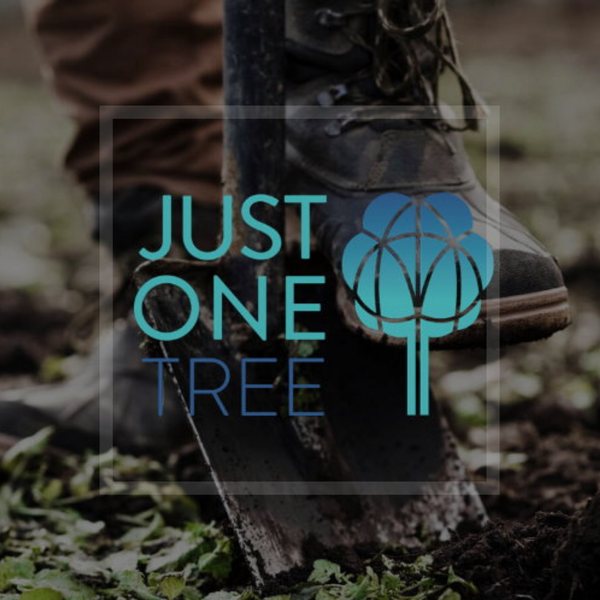 Making a Difference | AMO Partner with JUST ONE Tree