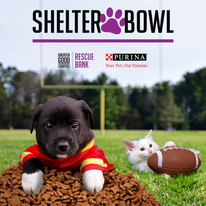 Shelter Bowl 2021: Feed Shelter Animals