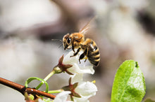 Load image into Gallery viewer, Help Save Bees with Project Peril