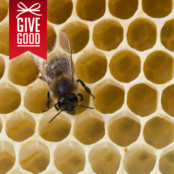 Help Save Bees with Project Peril