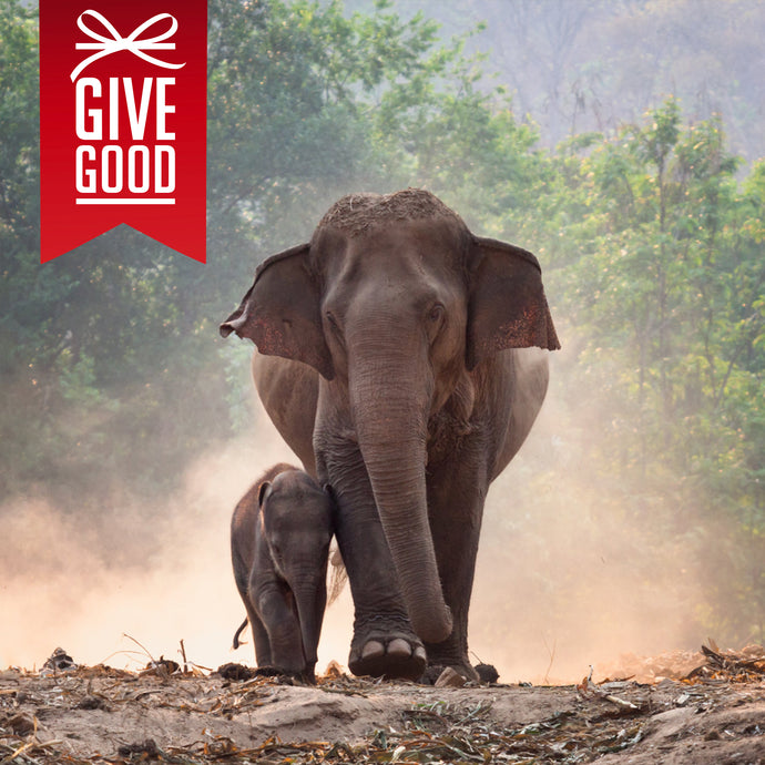 Help Save the Asian Elephant with Project Peril