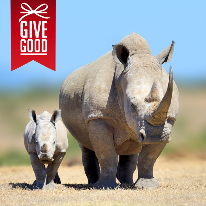 Help Save the Rhino with Project Peril