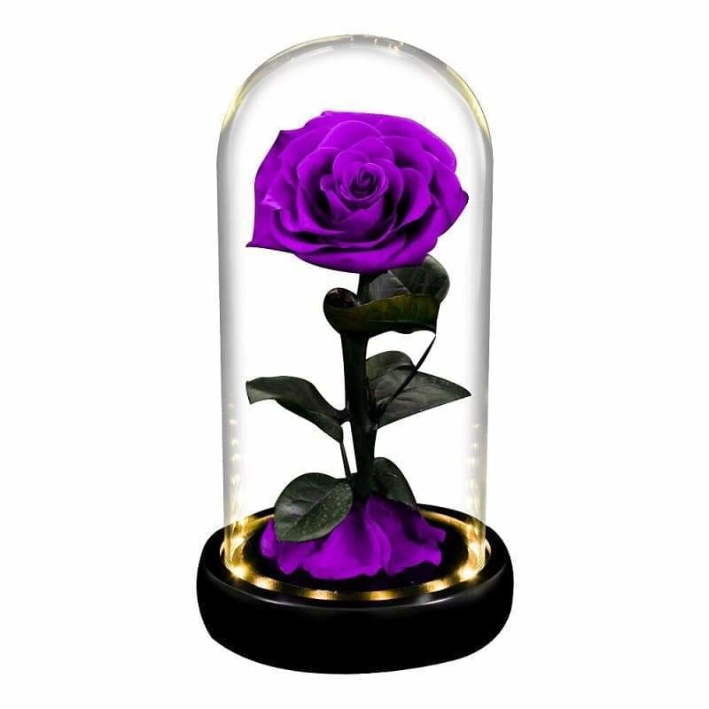 Violet Led XL Eternal Rose Under Glass Bell