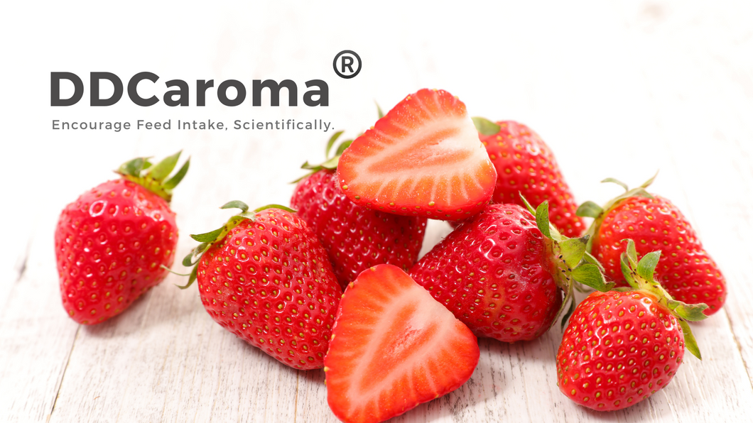 DDCaroma - Strawberry Flavor
