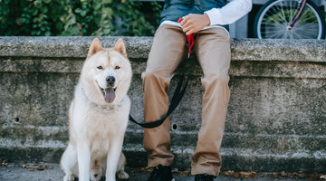 Finding The BEST Leash For Your Dog
