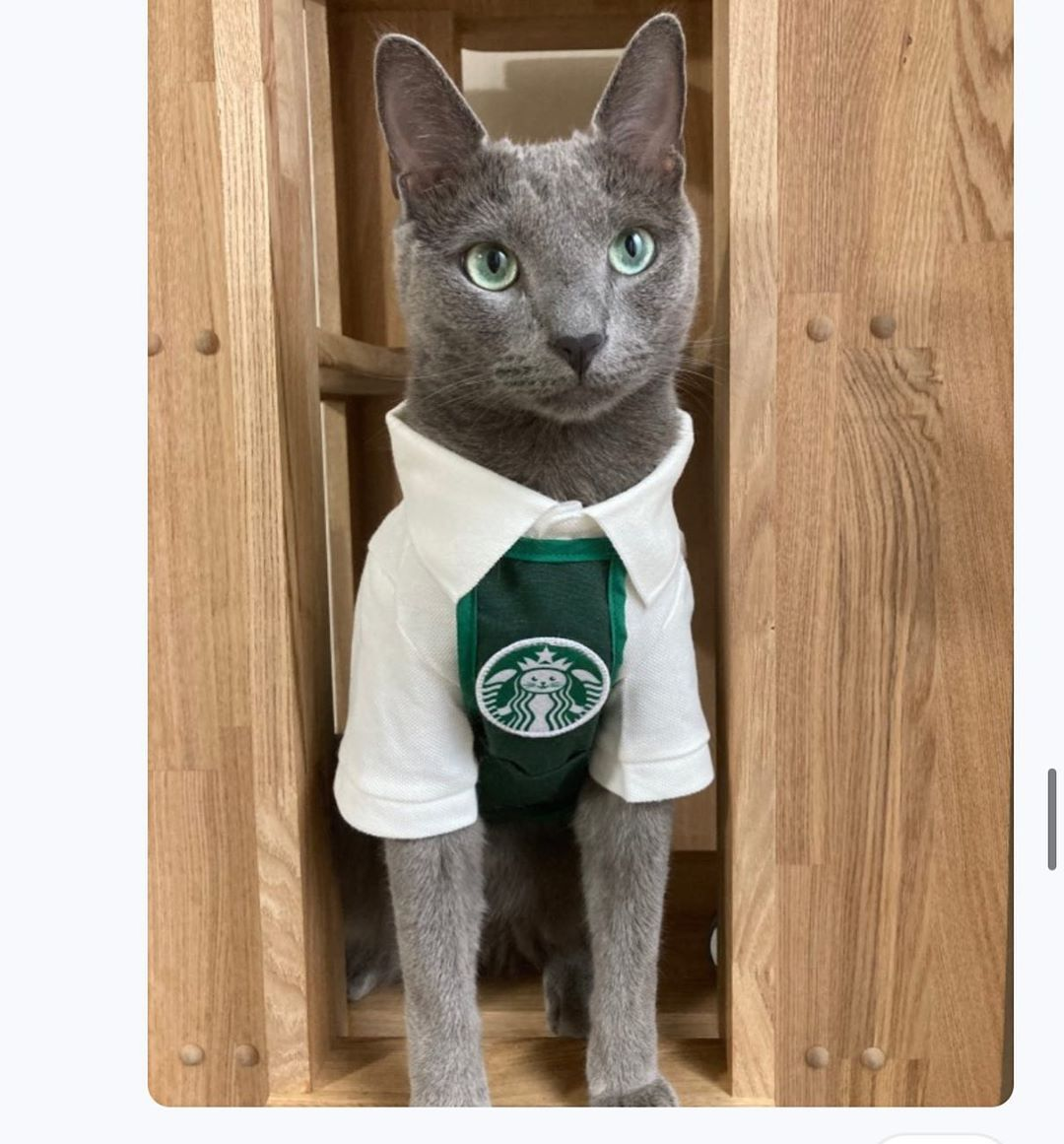 Pet Clothing  Starcats Coffee Maker Costumes Work Apron