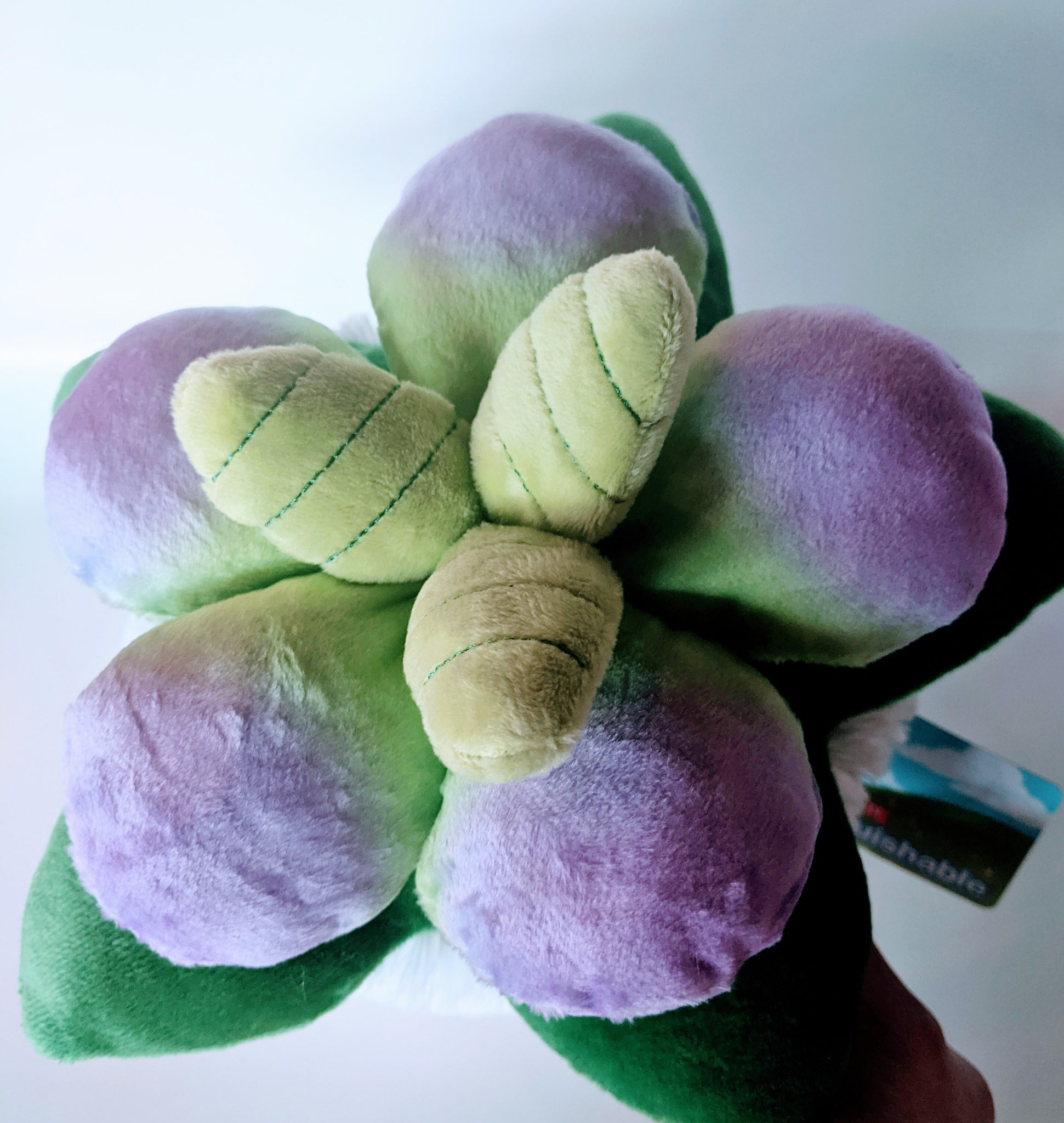 Succulent Squishable (medium size)