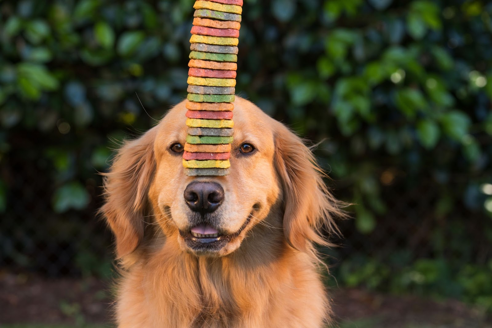 Dog with treats on nose Closing Gifts for Real Estate Agents