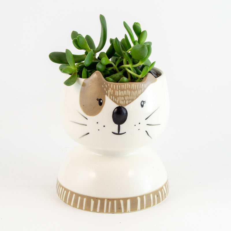 (Dog) Box Planter