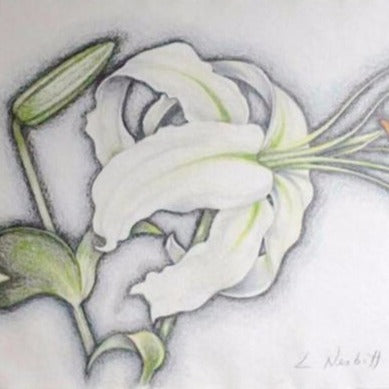 "Nesbitt, Lowell  -"" White Lily"" Colored Pencil on Paper"