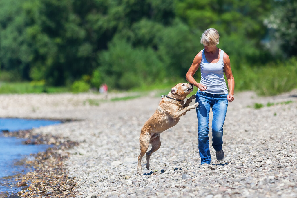 Dog Jumping: How to Teach Your Dog to Stop Jumping Up On You