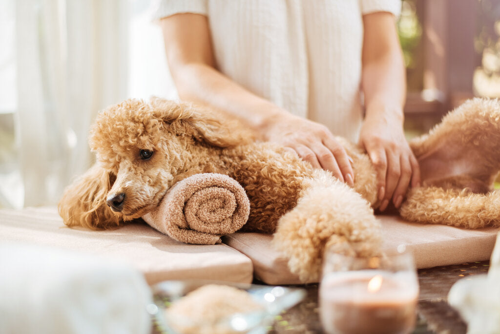 Dog Massage: Benefits and Step-By-Step Instructions