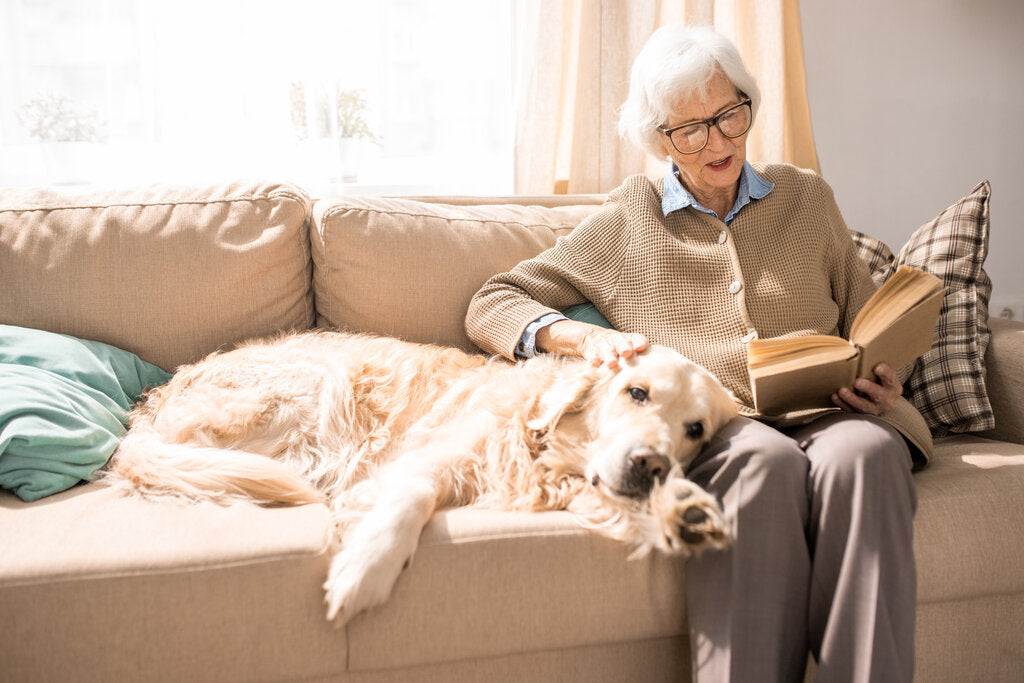 How Long Do Dogs Live: The Life Expectancy of Your Pet