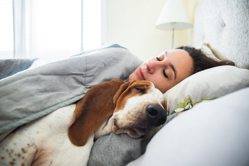 Your Dog in Bed with You: The Pros and Cons of Co-Sleeping with Your Pup