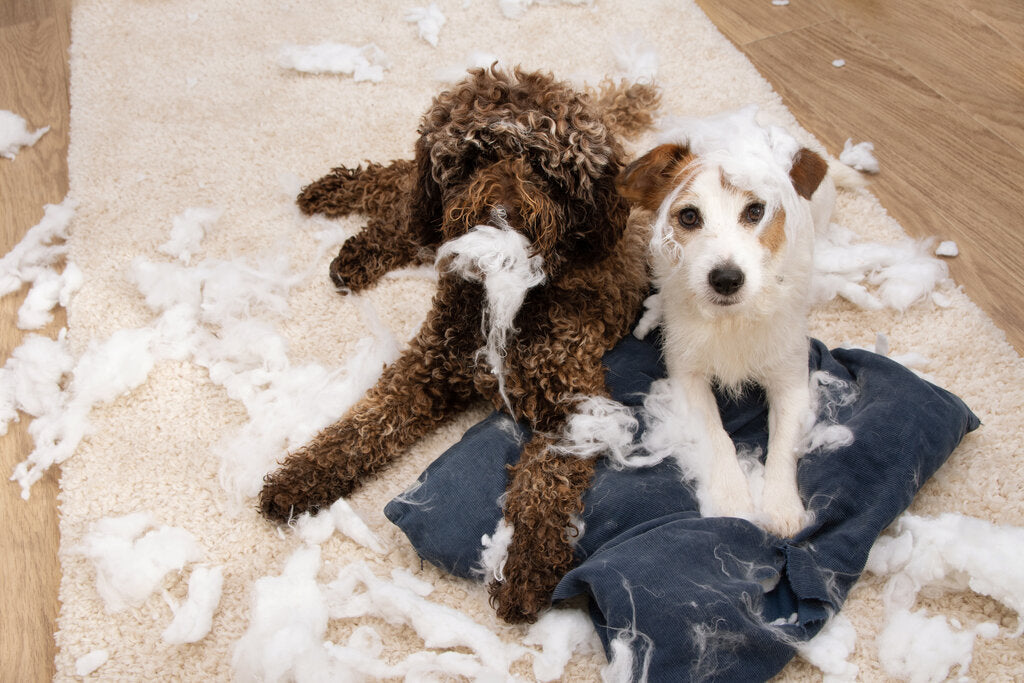 10 Puppy Proofing Tips for Your House