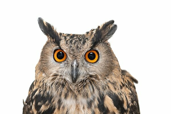 Night Owl and Morning Lark: Is One More Intelligent and the Other Happier?