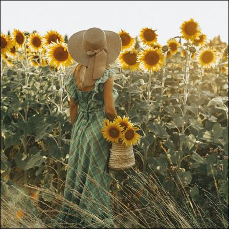 Sea Of Gold Sunflowers Greeting Card