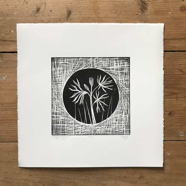 Ragged Robin (Lus síoda) Irish Wildflower Lino Cut Print | Original Handmade & Limited Edition by Mary Callaghan