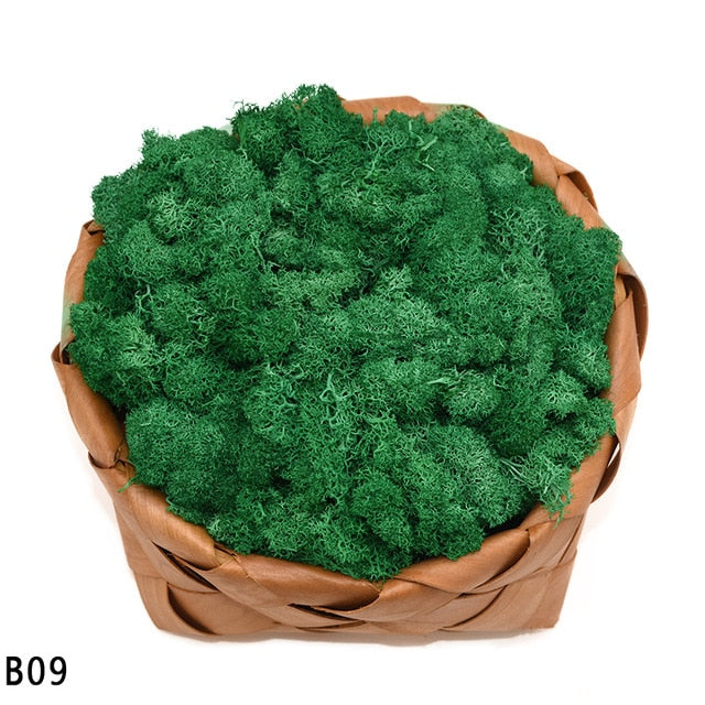 40g Artificial Plant Eternal Life Moss Mini Garden Micro Landscape Accessories Home Decoration Wall DIY Flower Material