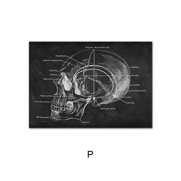 Human Anatomy Artwork Medical Wall Picture
